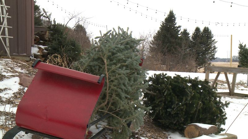 In the days following Christmas, the quiet scene at Curvue Hideaway + Trees in Eau  Claire.