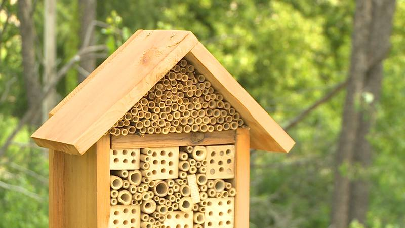 This is one of six bee hotels you can find around River Prairie.