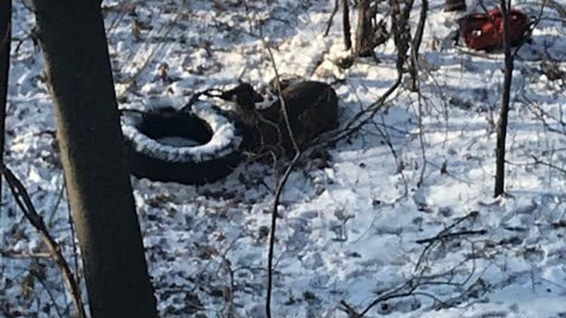 The Eau Claire Fire Department was called out to a report of a deer that had fallen through the...