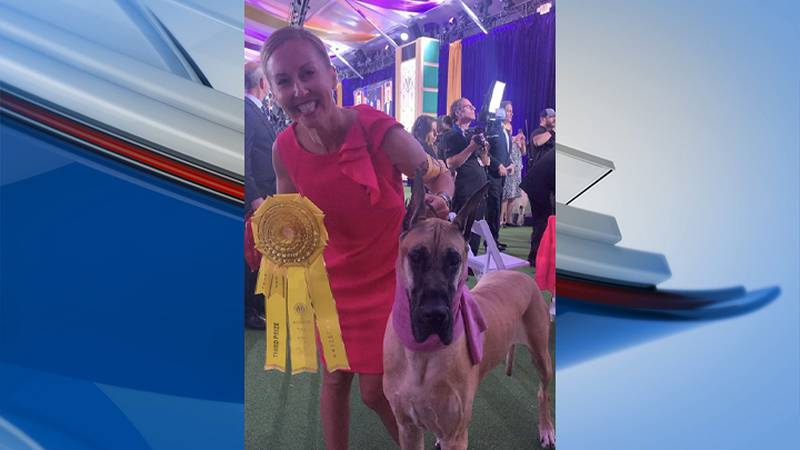 Wausau Great Dane earns high honors at Westminster Dog Show