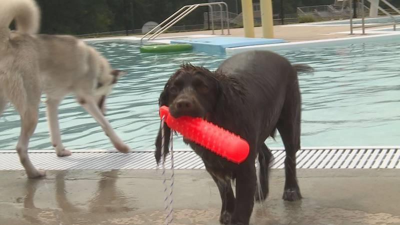 Dog pool party at Memorial Pool in Wausau WI.