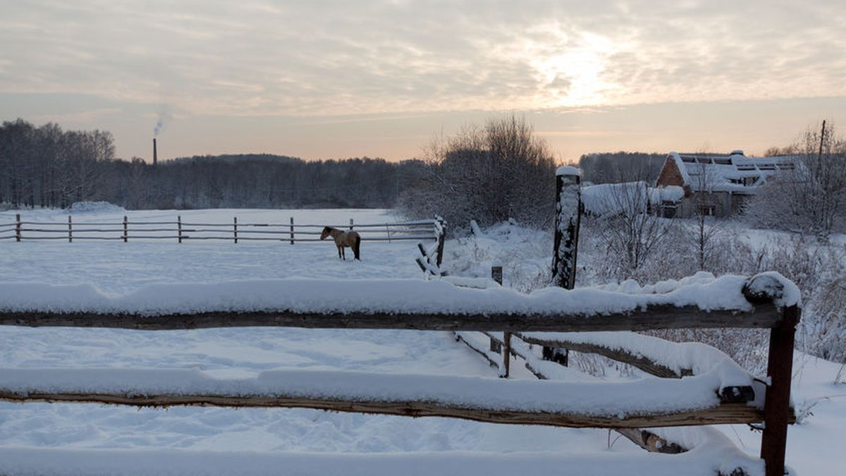 Horse near the fence in winter time (FILE) 123RF