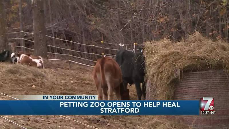 Stratford petting zoo helping family, community heal