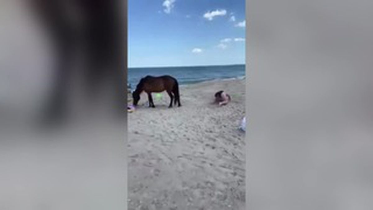 A Facebook video posted over the weekend shows the woman getting kicked after she swatted one of the horses with a plastic shovel.