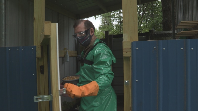 Wild Instincts' rehabilitation director, Matt Naniot suits up in a mask, gloves, goggles,...