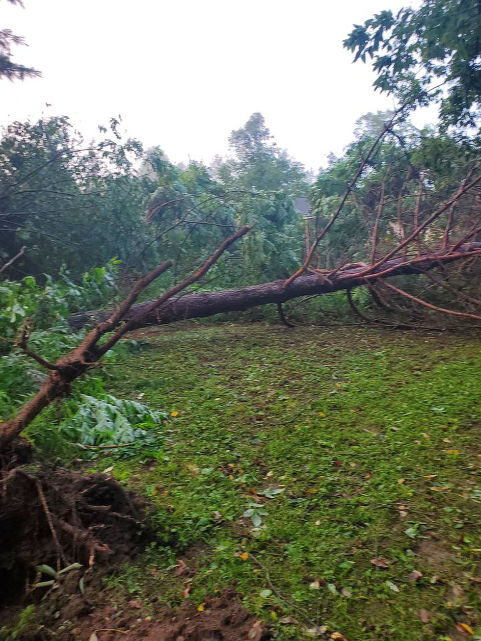 Down trees were common with damage from the tornado in southern Lincoln County.