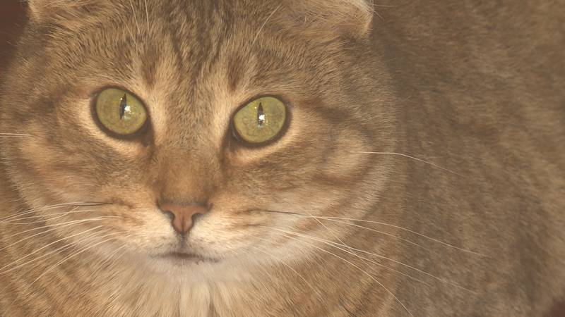 The Marathon County Humane Society is just one of the many local non-profit organizations in...