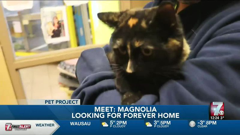 Magnolia is a 5-year-old cat who came from a home that had too many cats.
