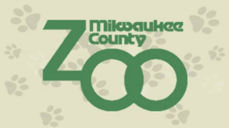 Snow Lilly came to the Milwaukee County Zoo in 2005 from the Bronx Zoo.