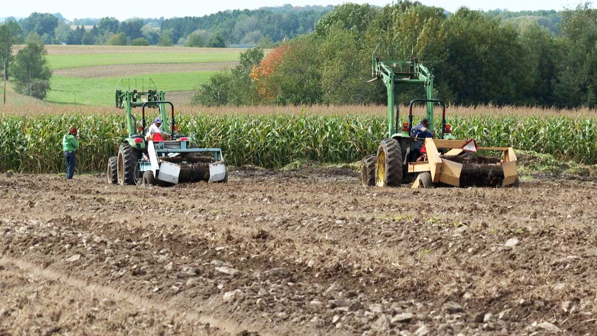 Foreign workers in the W-2A visa program work on Hsu Ginseng Farm fields in Wausau, September...