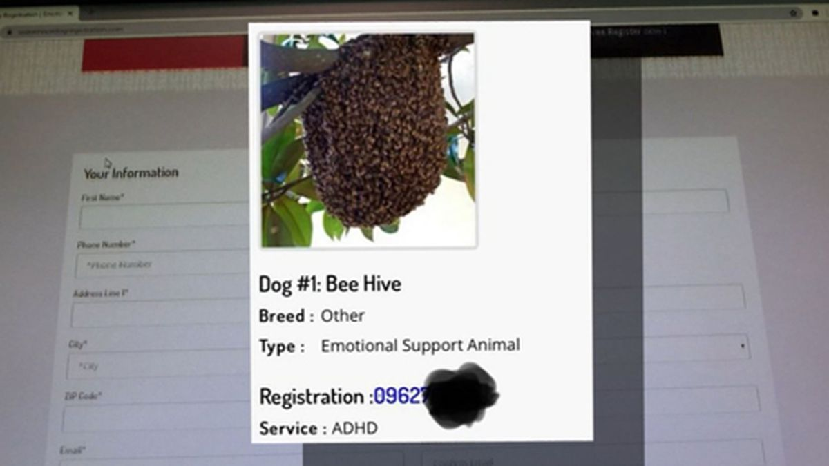 An Arizona man registered a beehive as a service animal. (Source: KPHO/KTVK/USA Service Dog Registration/CNN)