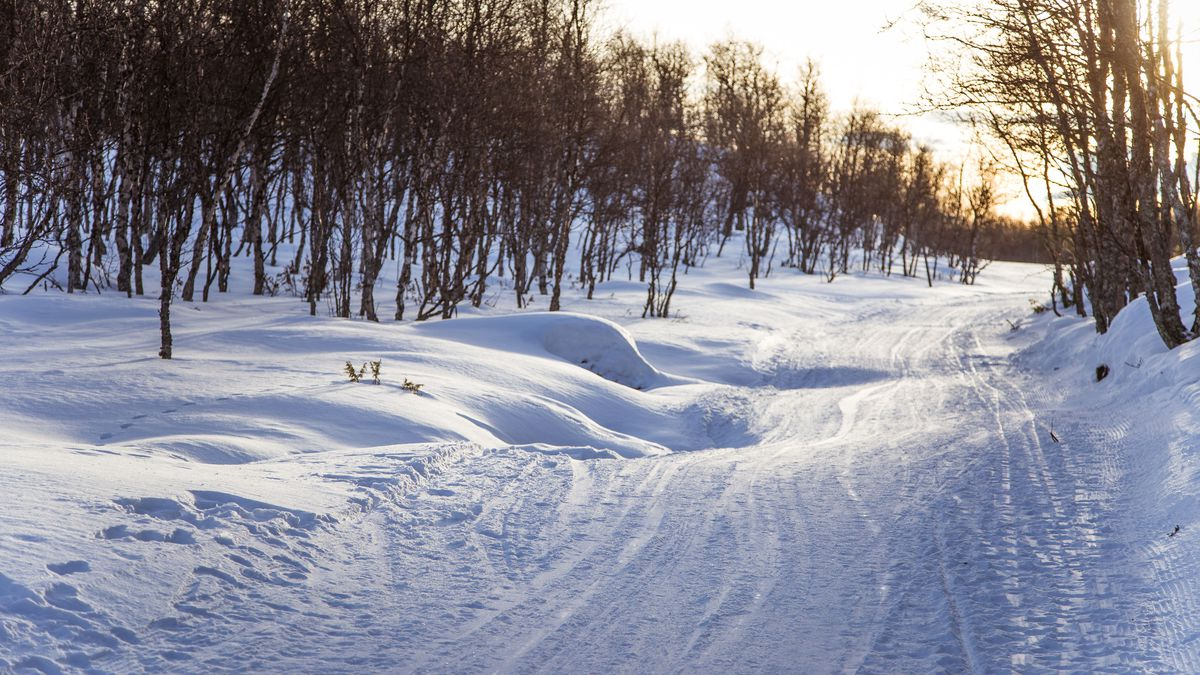 81182789 - a beautiful white landscape of a snowy norwegian winter day with tracks for snowmobile or dog sled
