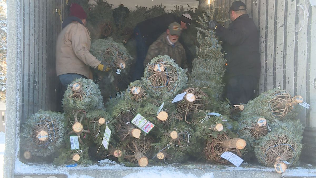 Volunteer veterans load donated Christmas trees into a Fed Ex van on Dec. 2, 2019. (WSAW Photo)