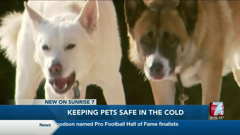 Keeping Pets Safe In The Cold