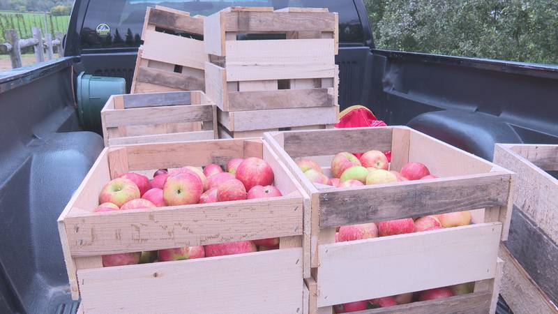 Due to the warm early spring and the frost in May, many orchards experienced a lack of apples...