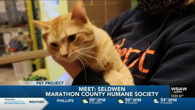 Pet Project: Meet Seldwen