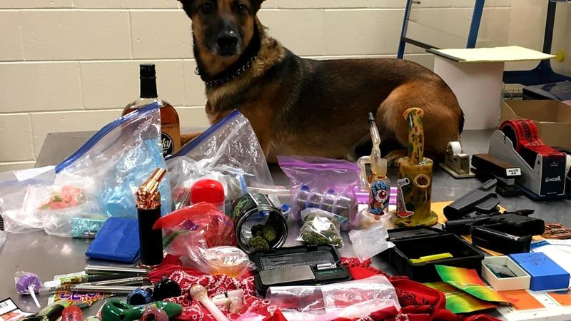 Marshfield Police Department K9 Rika poses with items discovered during a traffic stop Friday...