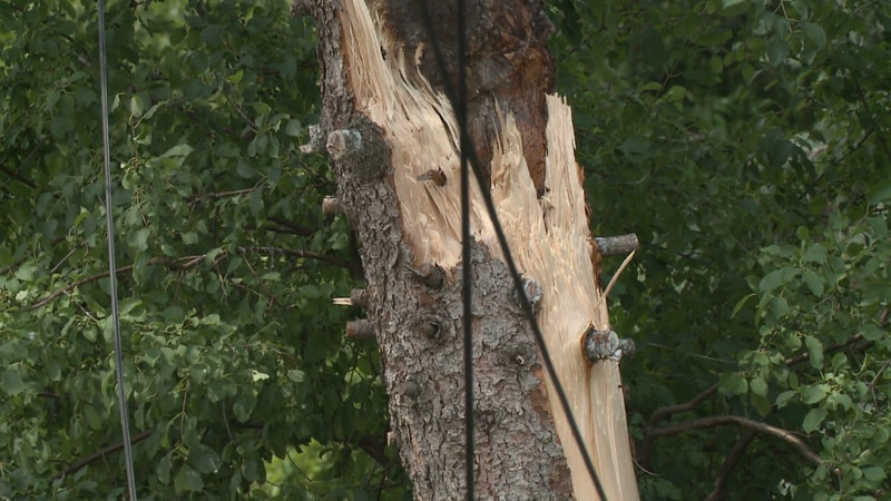 Trees and powerlines down in Langlade County.