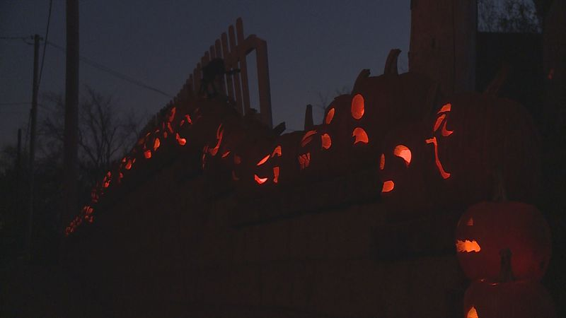 79 Jack-o'-lanterns can be seen in front of the Marten's home on Ridgeland Ave. in Schofield.
