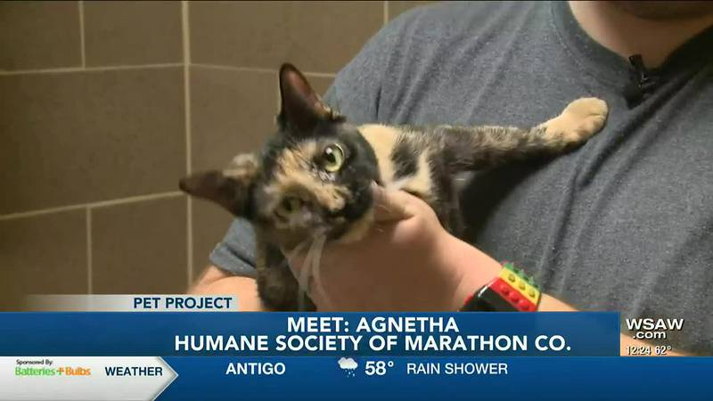 Agnetha is a 6-year-old domestic short hair cat that came to the Humane Society of Marathon...
