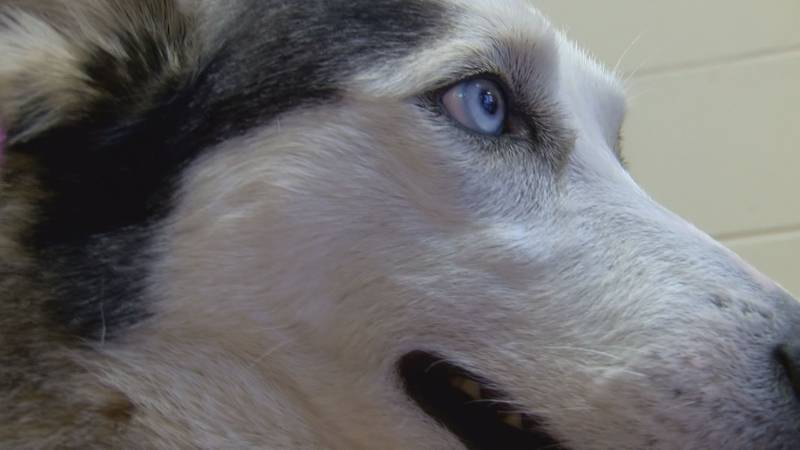 Mitchell County animal shelter leaders are encouraging all pet owners to keep them hydrated and...