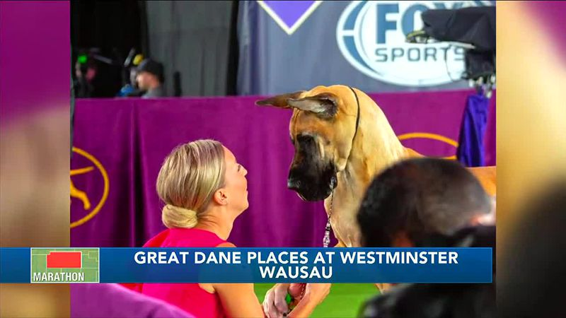 Great Dane Places At Westminster
