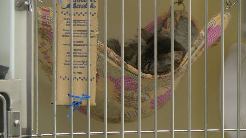 More pets go missing during the Fourth of July weekend than any other time during the year.