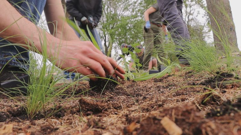 Wild One's volunteers planted 1,400 deep-rooted native plants to hold the soil together, reduce...