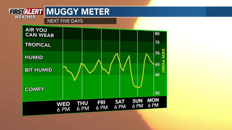 Warm and humid throughout the week