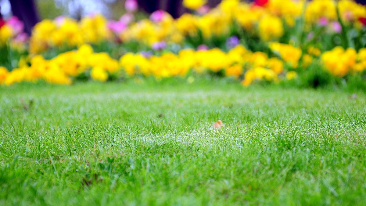 How To Toughen Up Your Plants For The Garden